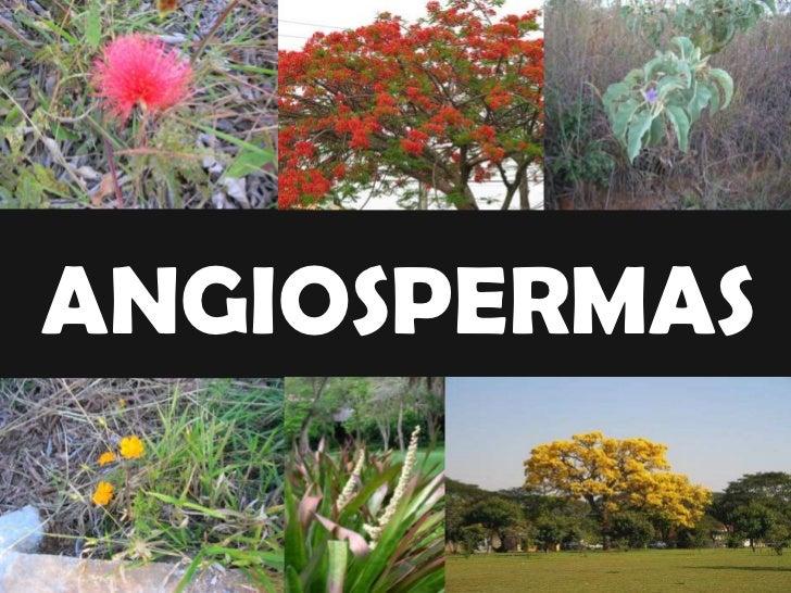 Plantas Angiospermas  Por Jéssica B