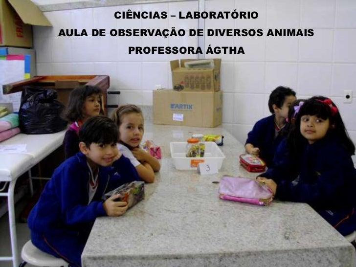 CIÊNCIAS – LABORATÓRIOAULA DE OBSERVAÇÃO DE DIVERSOS ANIMAIS          PROFESSORA ÁGTHA