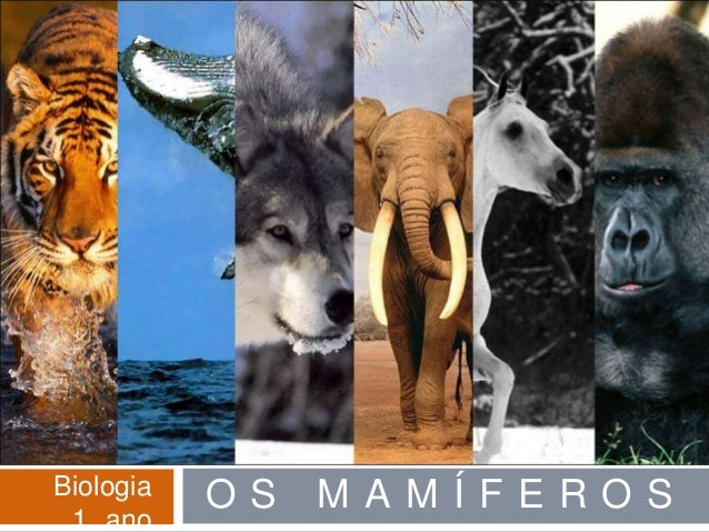 Biologia   OS   MAMÍFEROS 1 ano