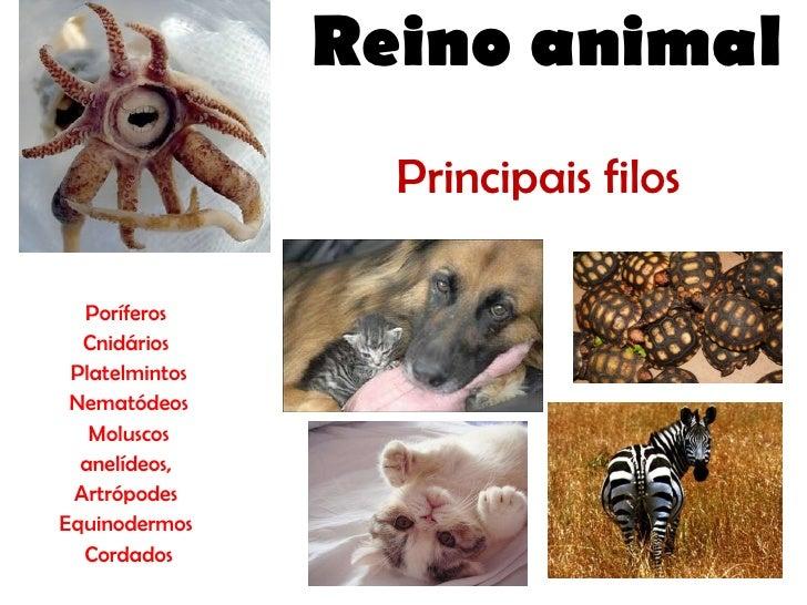Principais filos Poríferos Cnidários Platelmintos Nematódeos Moluscos anelídeos, Artrópodes Equinodermos  Cordados Reino a...