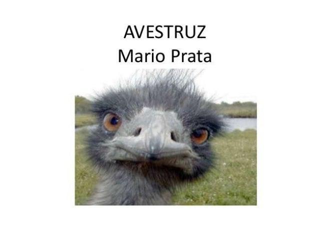 Antes: Questionamentos sobre o texto:a)Vocês conhecem um avestruz?b)Alguém já viu alguma foto deavestruz? (Mostrar figuras...