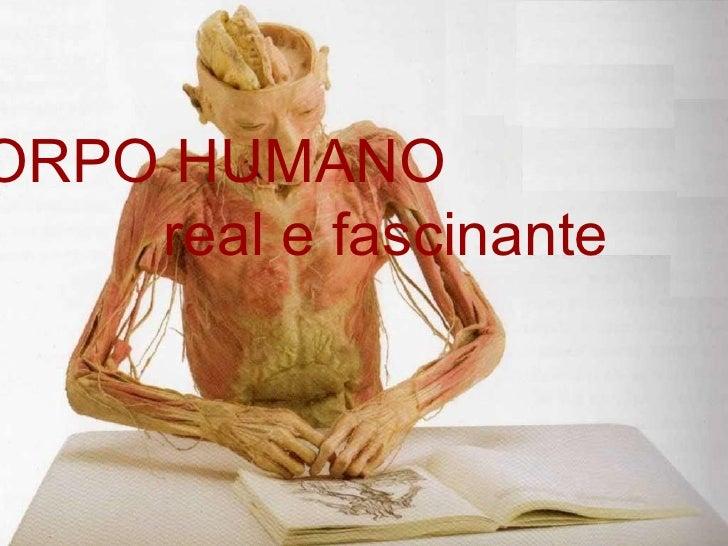 Mostra  Corpo Humano Real e Fascinante