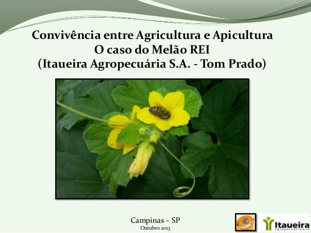 Convivência entre Agricultura e Apicultura O caso do Melão REI (Itaueira Agropecuária S.A. - Tom Prado)  Campinas – SP Out...