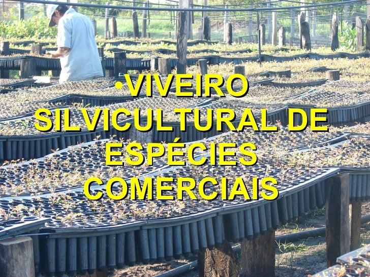 <ul><li>VIVEIRO SILVICULTURAL DE ESPÉCIES COMERCIAIS </li></ul>