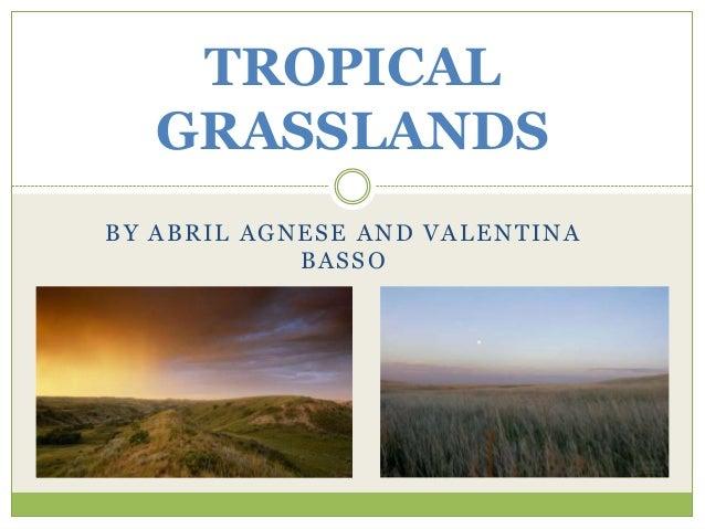 April   Valentina tropical grasslands. EDLC 3rd.year