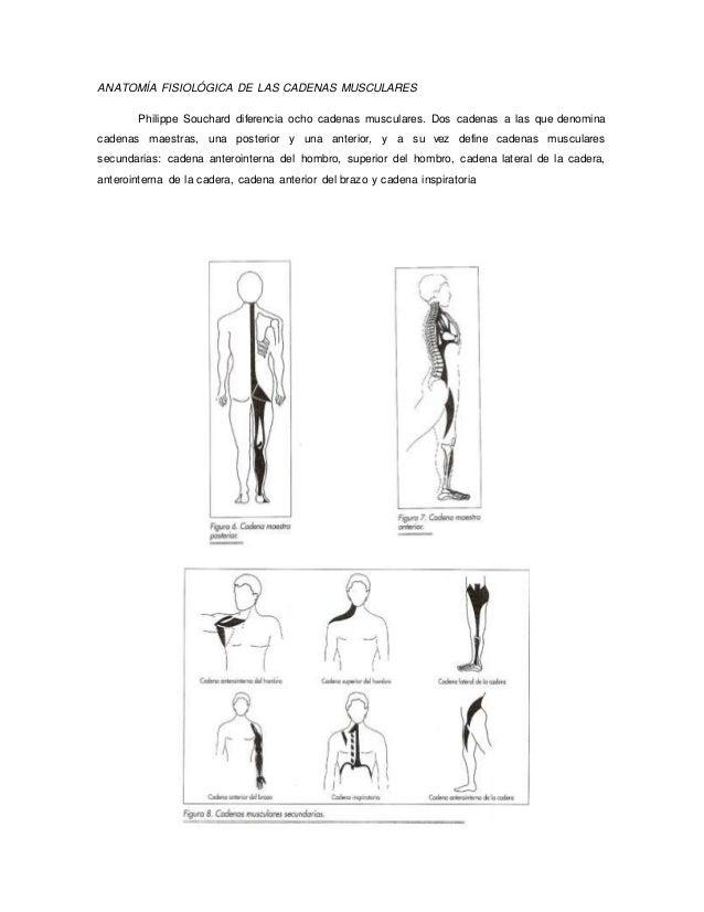 cadenas musculares leupold busquet pdf