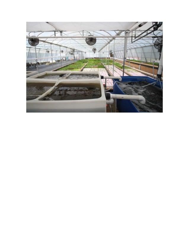 Aquaponics system design aquaponics system aquaponic for Aquaponics grow bed