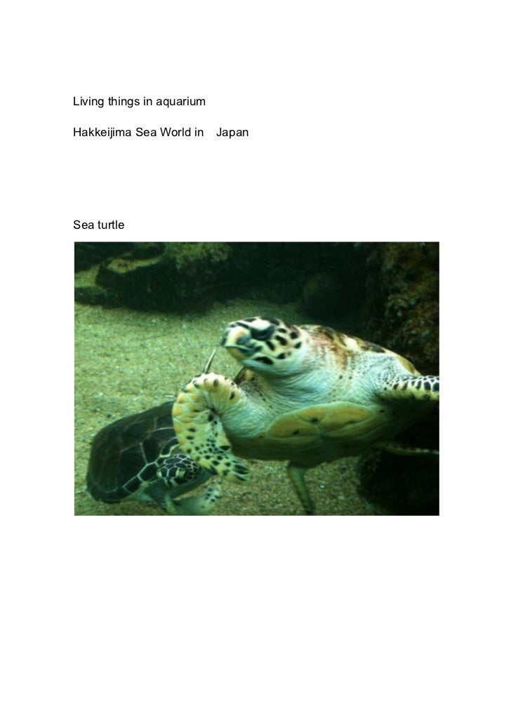 Living things in aquarium<br />Hakkeijima Sea World in Japan<br />Sea turtle<br />[Chin;anago]<br />Dolphin<br />