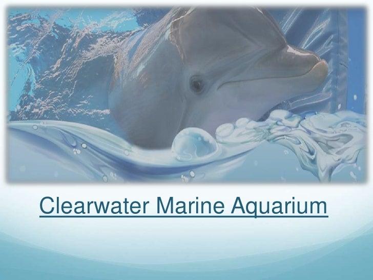 Clearwater Marine Aquarium<br />
