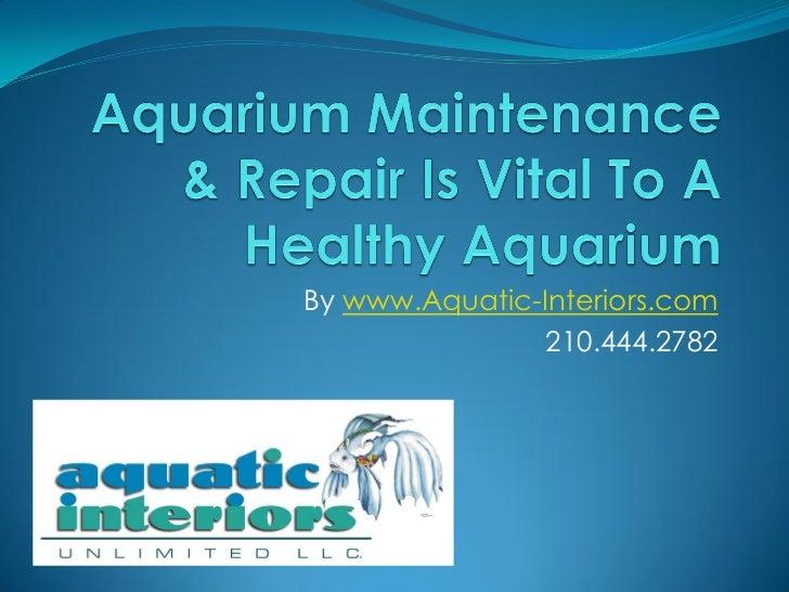 A Healthy Custom Aquarium Must Have Aquarium Maintenance & Servicing