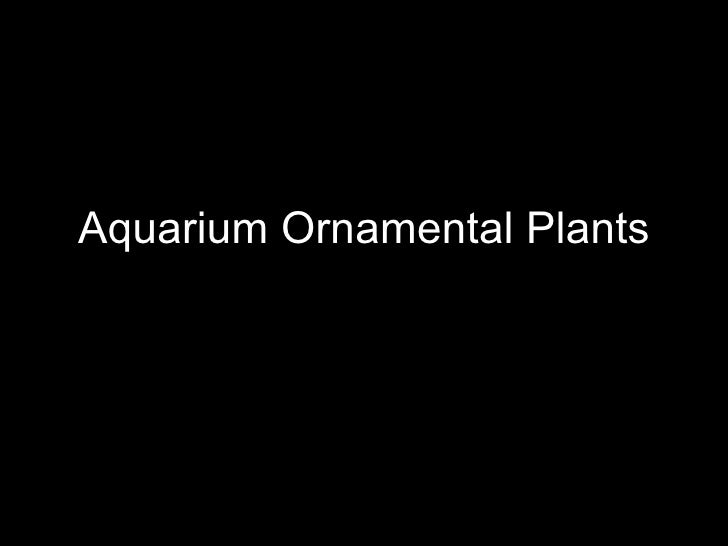 Aquarium Ornamental Plants
