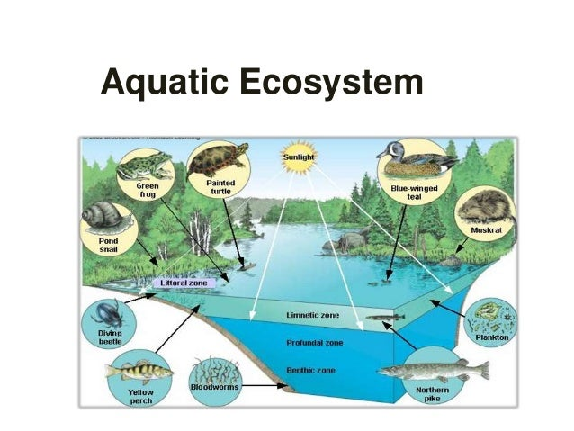 Aquatic ecosystem and water pollution