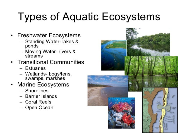 the effect on water ecosystem type Our water resources face this type of pollution is despite years of clear over-use with evident changes in both water and related ecosystem.