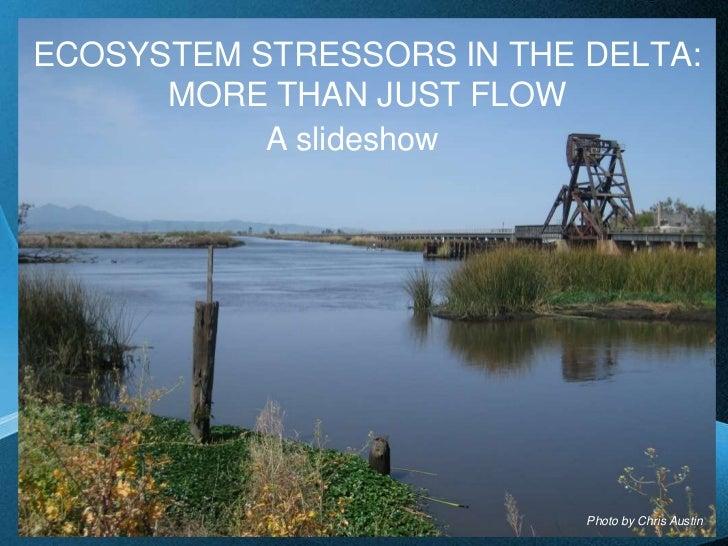 Aquatic ecosystem stressors in the delta   slideshow