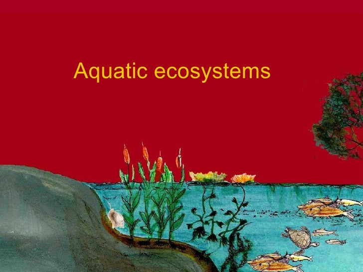 Aquatic Systems  An Overview