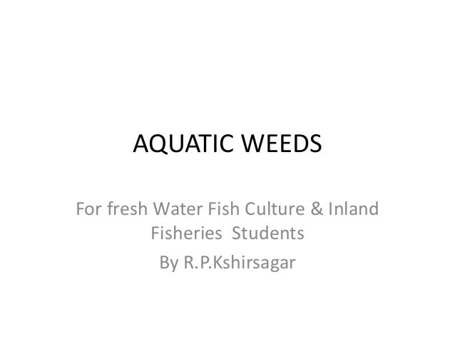 AQUATIC WEEDS For fresh Water Fish Culture & Inland Fisheries Students By R.P.Kshirsagar