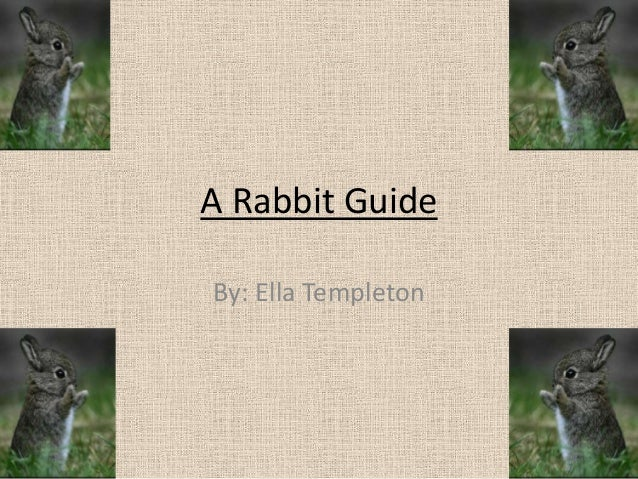 A Rabbit Guide By: Ella Templeton