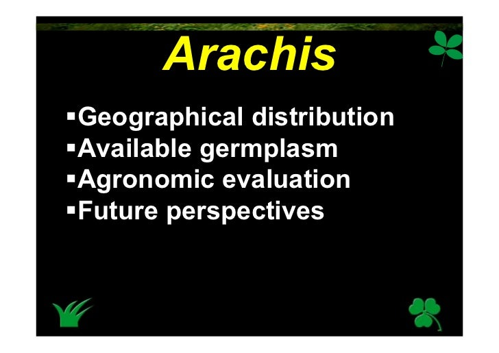 Arachis Geographical distribution Available germplasm Agronomic evaluation Future perspectives