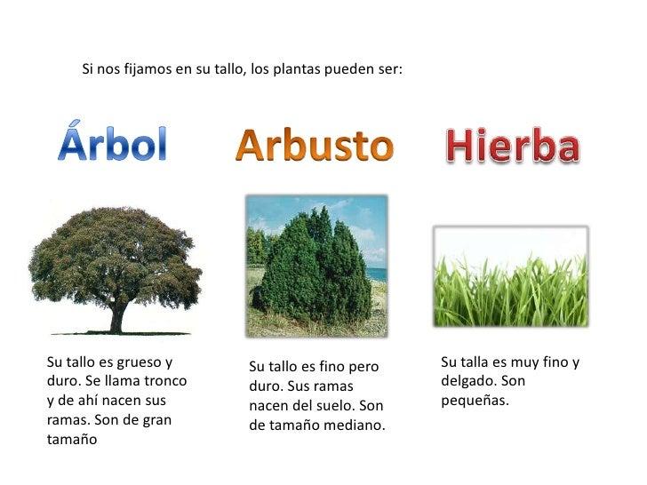 Arboles arbustos y hierbas la clase de goyi - Nombres de arbustos ...