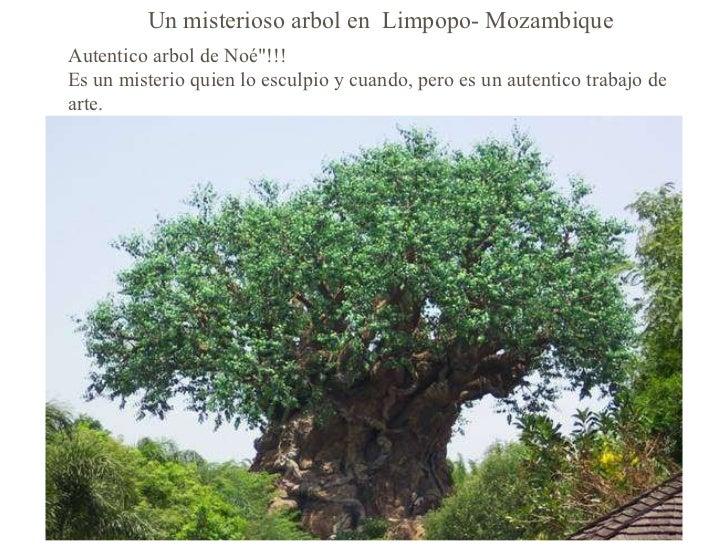 """Un misterioso arbol en  Limpopo- Mozambique Autentico arbol de Noé""""!!! Es un misterio quien lo esculpio y cuando, per..."""