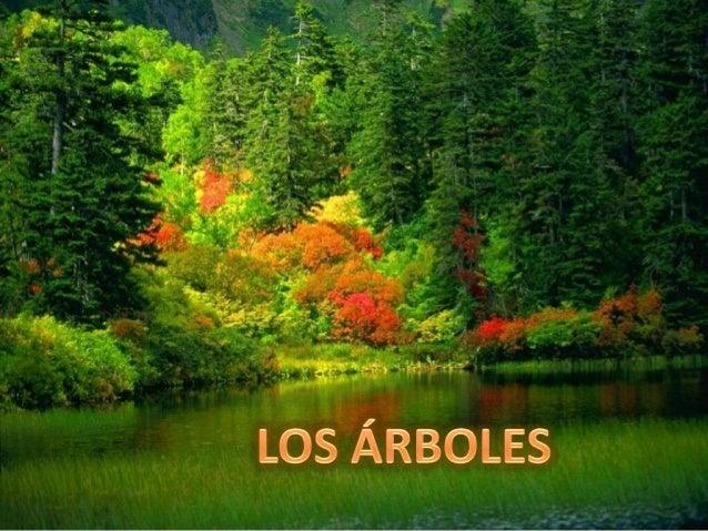 OLMO DE SIBERIA (Ulmus pumila) •  Hoja : simple y caduca, de pequeño tamaño y forma elíptica y lanceoladas, quedan dispues...