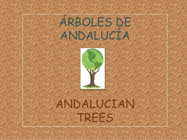 ANDALUCIAN TREES