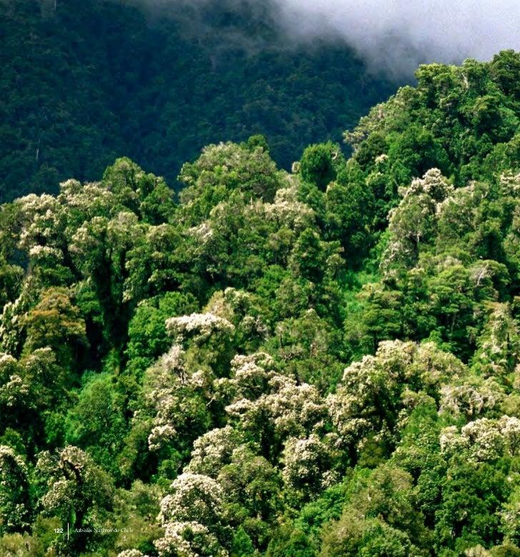 122   Arboles Nativos de Chile