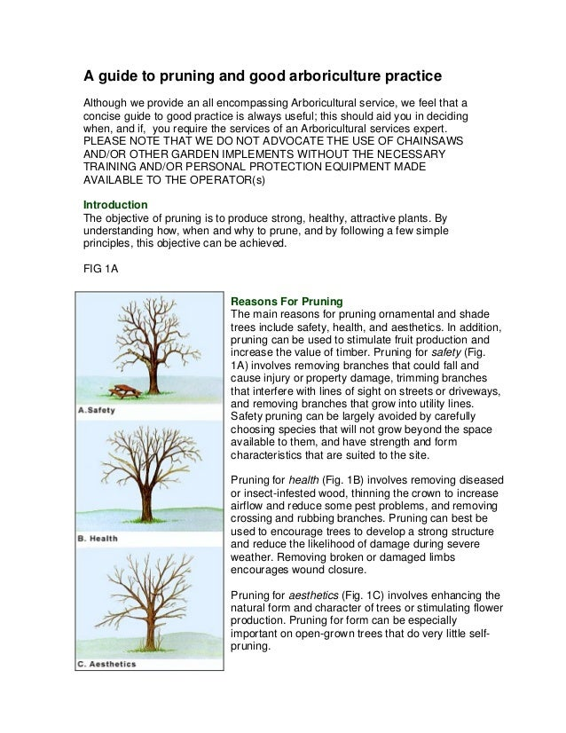 A guide to pruning and good arboriculture practiceAlthough we provide an all encompassing Arboricultural service, we feel ...