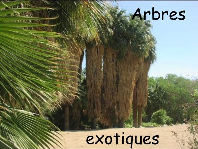 Arbresexotiques