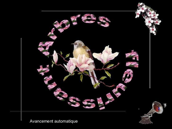 Arbres  fleurissant  Avancement automatique