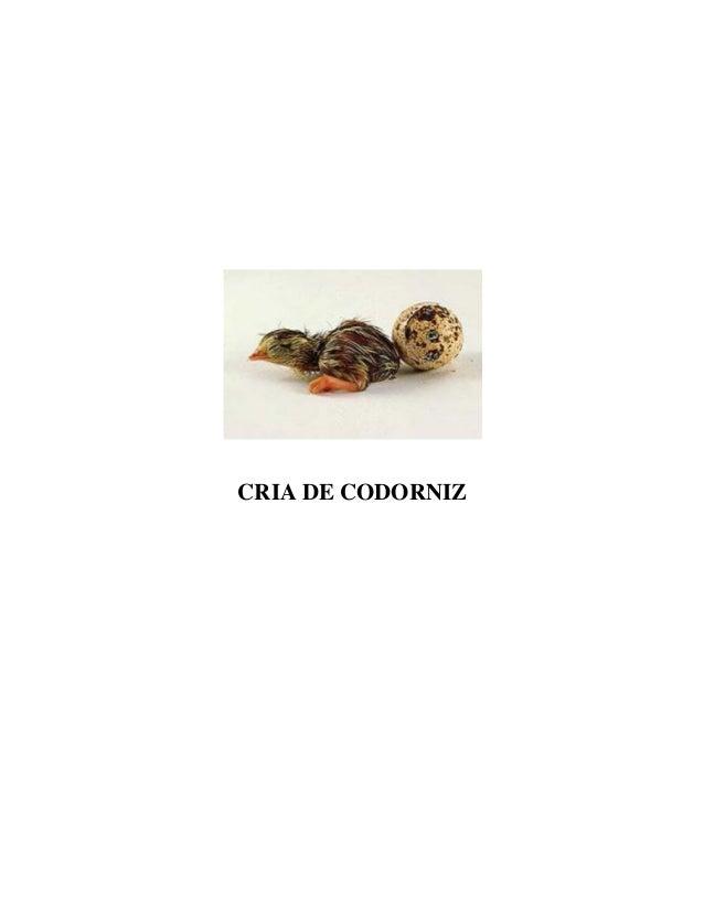 CRIA DE CODORNIZ