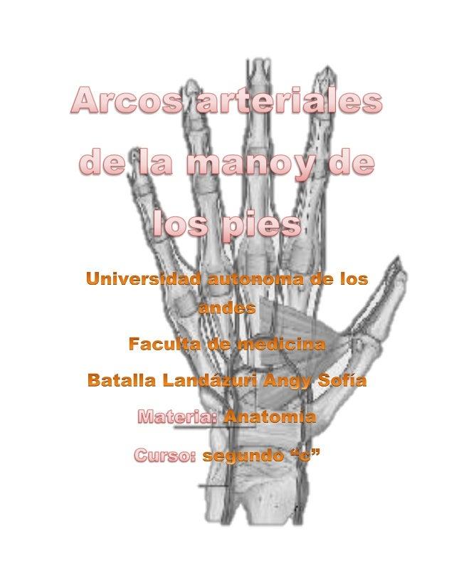 Las arterias que se encuentran en la región palmar están directamente relacionadas a los arcos palmares superficial y prof...