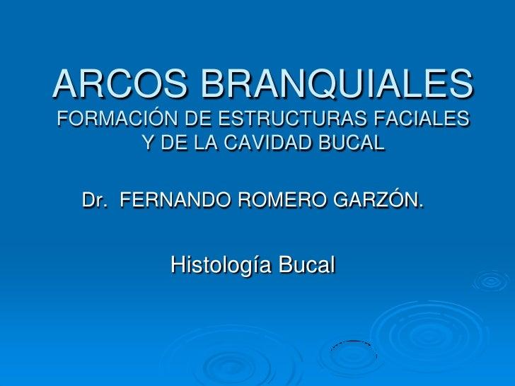ARCOS BRANQUIALESFORMACIÓN DE ESTRUCTURAS FACIALES Y DE LA CAVIDAD BUCAL<br />Dr.  FERNANDO ROMERO GARZÓN.<br />Histología...