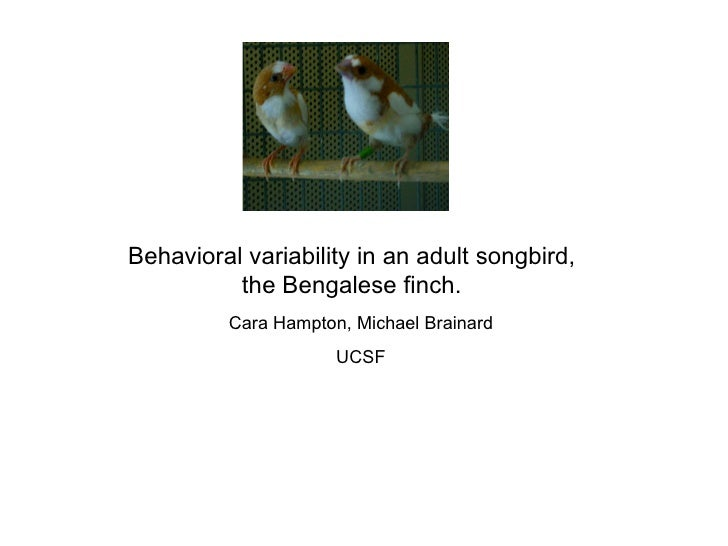 Behavioral variability in an adult songbird, the Bengalese finch. Cara Hampton, Michael Brainard UCSF