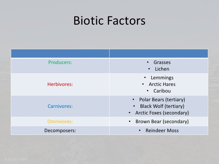 Abiotic Factors of the Tundra  TutorVistacom