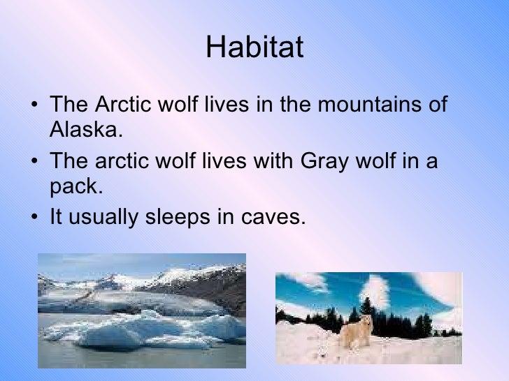 Wolf FAQs  International Wolf Center