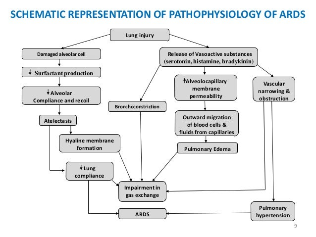 Ards Pathophysiology Lampe : acute respiratory distress syndrome ...