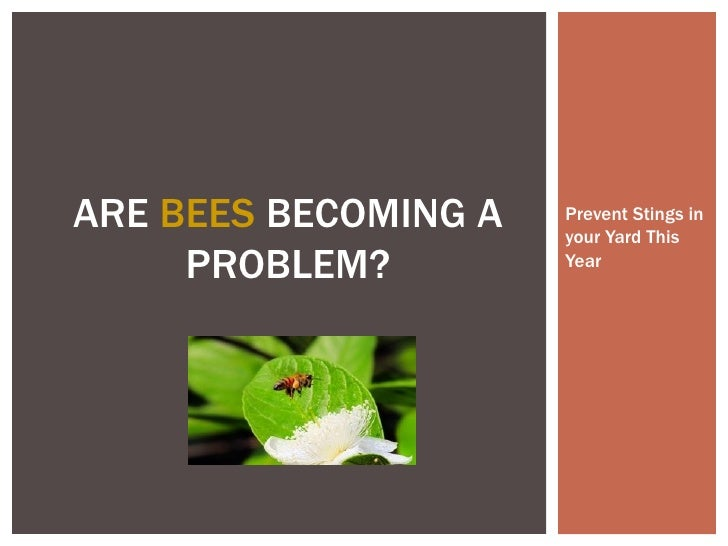 Are bees becoming a problem   prevent stings in your yard this year