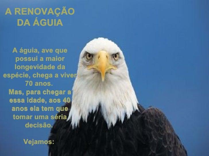 A RENOVAÇÃO DA ÁGUIA A águia, ave que possui a maior longevidade da espécie, chega a viver 70 anos.  Mas, para chegar a es...