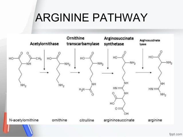 arginine sythesis pathway enzyme Enzymes arginine deiminase (adi) and ornithine transcarbamilase of enzymes involved in arginine metabolism in ( adi) and ornithine transcarbamilase (otcase.