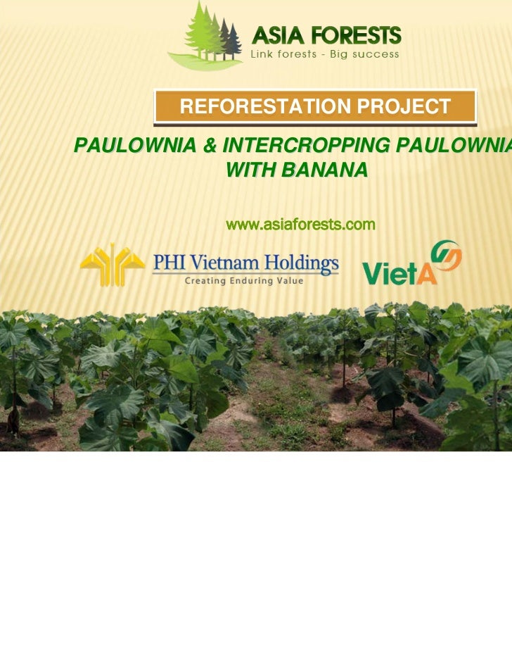 REFORESTATION PROJECT           PAULOWNIA & INTERCROPPING PAULOWNIA                       WITH BANANA                     ...