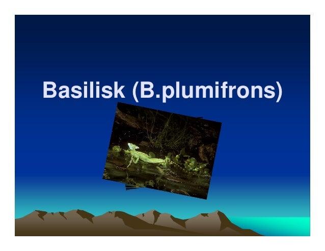 Basilisk (B.plumifrons)       By: Arham.K        Fessenden           Gr.6