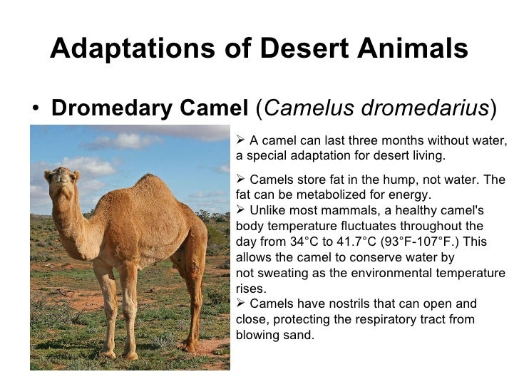adaptive features of animals in desert