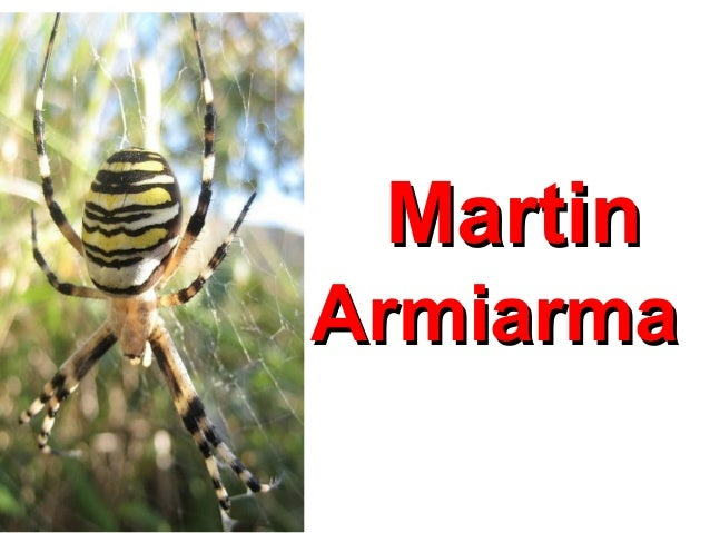 Martin Armiarma