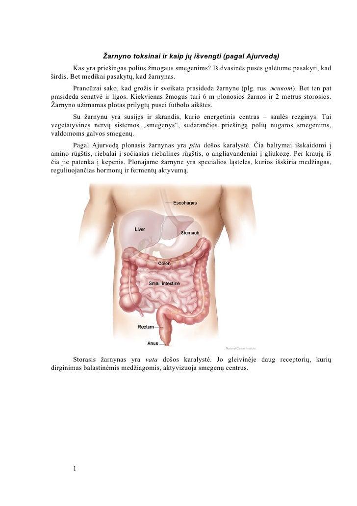 Žarnyno toksinai ir kaip jų išvengti (pagal Ajurvedą)         Kas yra priešingas polius žmogaus smegenims? Iš dvasinės pus...