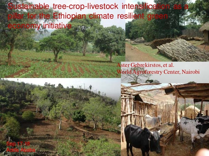 Sustainable tree-crop-livestock intensification as a pillar for the Ethiopian climate resilient green economy initiative