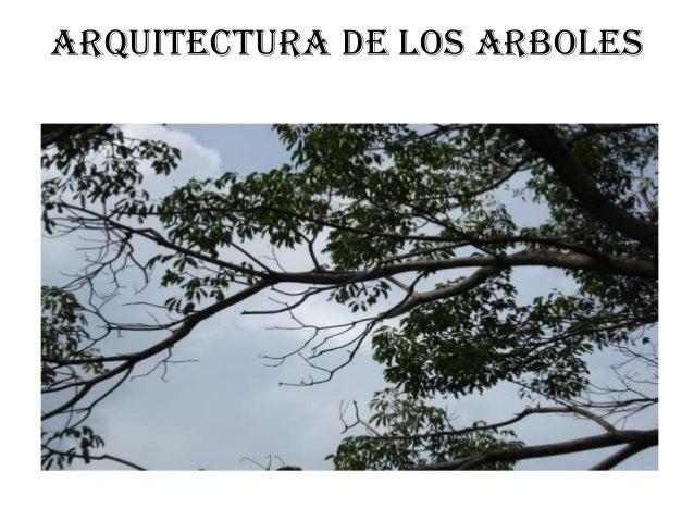 ARQUITECTURA DE LOS ARBOLES