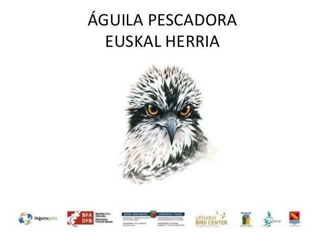 ÁGUILA PESCADORA EUSKAL HERRIA