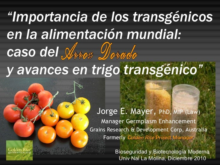 """Arroz Dorado """" Importancia de los transgénicos  en la alimentación mundial:  caso del y avances en trigo transgénico""""   Bi..."""