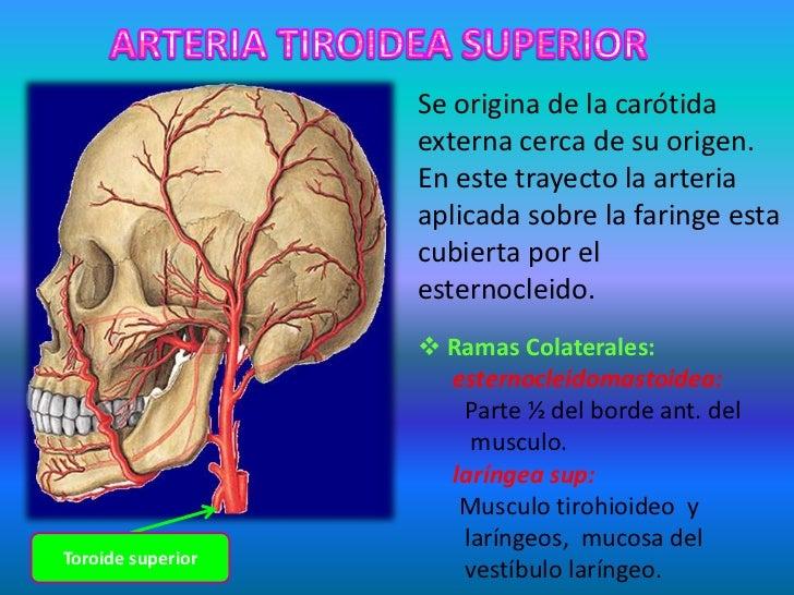 Internatura la cirugía vascular